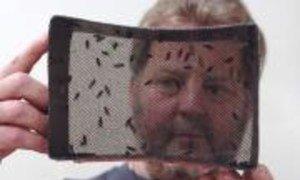 IAEA technician looks at newly emerged tsetse flies in an emergence cage. (Entomology Unit, Seibersdorf, Austria)