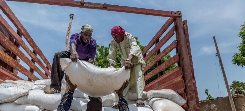 De l'aide alimentaire en cours de distribution aux populations déplacées dans le camp de Banki, Etat de Borno, dans le nord-ouest du Nigéria.