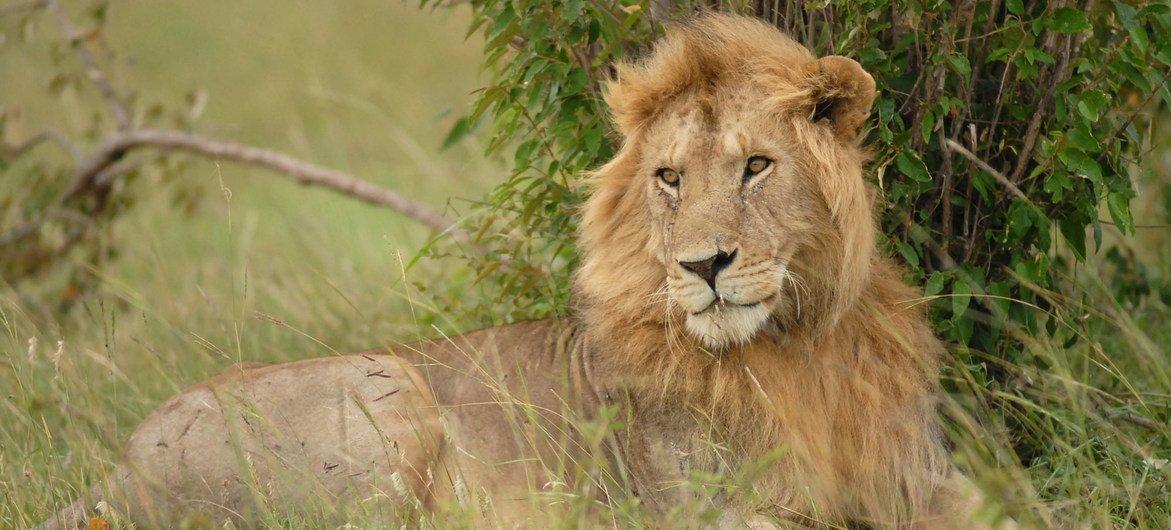Pesquisa e prevenção podem minimizar disputa entre formas de vida selvagem e comunidades