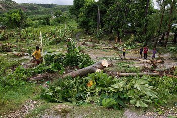 A man works to clear downed trees from his property near the western town of Leoganne, after Hurricane Matthew made landfall in Haiti.  He lost his crops and livestock.