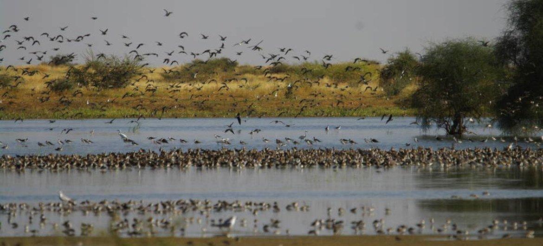 """Para Guterres, as jornadas das aves migratórias """"inspiram pessoas de todas as idades, em todo o mundo. """""""