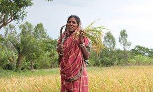 Une femme du Bengale occidental, en Inde. En Inde, 74,5% des femmes rurales sont des travailleurs agricoles mais seulement 9,3% sont propriétaires des terres. Photo ONU Femmes/Ashutosh Nego