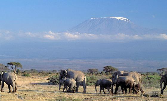 Durante a CMS COP13, 10 novas espécies devem ser adicionadas para proteção na Convenção. Entre eles, o elefante asiático.