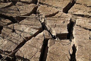 Au Sahel, plusieurs vagues de sécheresse en 2017 ont ravagé les cultures et le bétail des agriculteurs