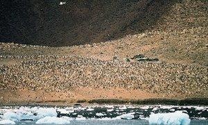 В  районе моря Росса.  Фото ЮНЕП