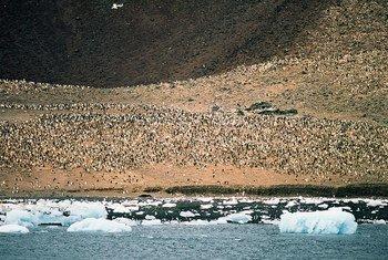 La Mer de Ross dans l'Antarctique. Photo PNUE GRID Arendal/Peter Prokosch