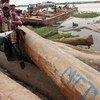 Verifying legality of timber at a wood depot near Kinshasa, Democratic Republic of Congo.