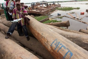 Vérification de la légalité du bois entreposé dans un dépôt près de Kinshasa, en République démocratique du Congo.