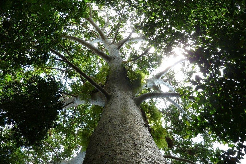 森林在缓解气候变化带来的影响方面发挥着重要作用。