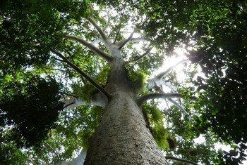 Les forêts jouent un rôle crucial pour de nombreux pays dans leur capacité à atténuer les changements climatiques.