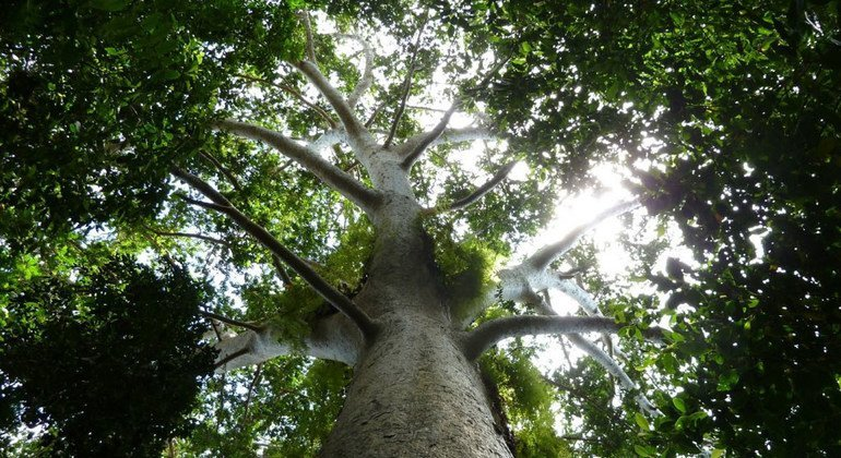 Как увидеть лес за деревьями