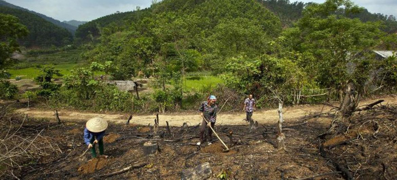 森林损失每年造成六分之一的全球温室气体排放量。