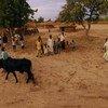 尼日利亚的农村。国际农业发展基金//David Rose