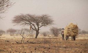 A farmer transporting hay to Tera weekly market, Tera, Bajirga, Niger.