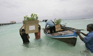 A new Africa-funded project will help small island developing states such as the Maldives mitigate and adapt production to changing climate conditions, and make farming practices overall more efficient.