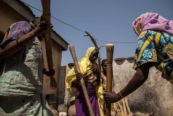Wanawake wakitwanga mahindi huko Banki jimbo la Borno kaskazini-mashariki mwa Nigeria ambapo FAO inasema teknolojia hii inapoteza muda mwingi ambao wanawake wangalitumia kuzalisha kitu kingine.
