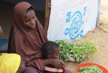 يعد الغذاء أولوية قصوى بالنسبة للأشخاص النازحين جراء النزاع في شمال شرق نيجيريا.