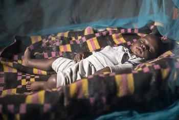 Redes de proteção contra mosquitos são uma das ferramentas mais eficazes contra a doença.