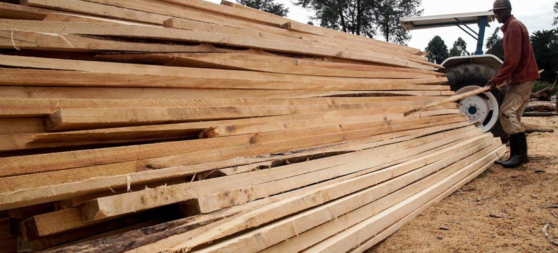 Workers stack wood cut at a processing facility near Kisumu, Kenya.