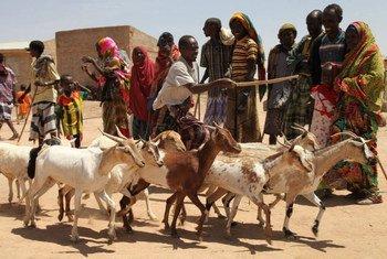 Les agriculteurs dans la Corne de l'Afrique ont besoin de toute urgence d'assistance, selon la FAO. Photo FAO/Tamiru Legesse