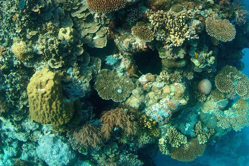 Les récifs coralliens sont les écosystèmes marins les plus riches en biodiversité du monde.