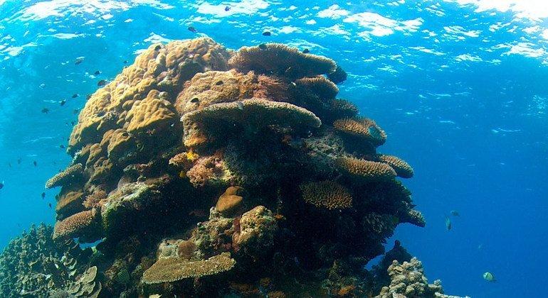 Emissões de CO2aumentamacidez dosoceanose ameaçambiodiversidade