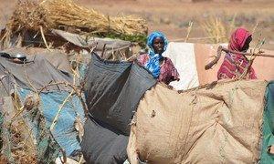 Des femmes déplacées du Djebel Marra devant leur abri de fortune à Tawilla, au Darfour-Nord (archives). Photo OCHA/Amy Martin