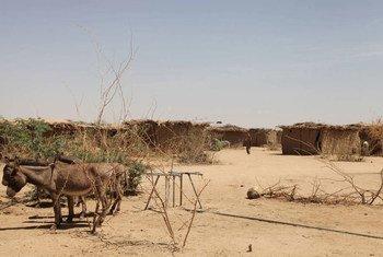 La sequía ha tenido un impacto devastador en Etiopía. Foto: FAO/Tamiru Legesse
