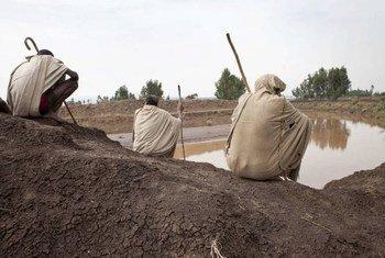 الملايين من المزارعين في البلدان النامية يعانون من قلة فرص الحصول على المياه الصالحة للشرب. المصدر: الفاو / جوليو نابوليتانو