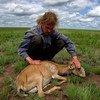 Saiga ecology expert Steffen Zuther examines a dying female animal after 2015 die-off in Kazakhstan.