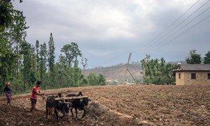 Des agriculteurs dans le village de Bheri Ganga, dans le district de Surkhet, au Népal. Photo FIDA/Sanjit Das/Panos