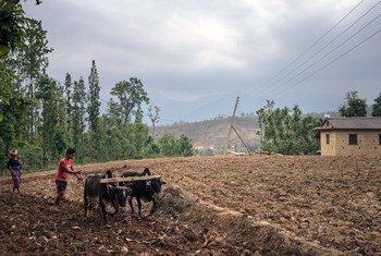 Farmers prepare land to plant turmeric. Bheri Ganga village, Surkhet district, western Nepal.