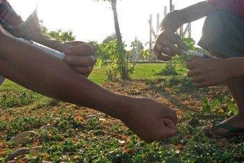 Malgré les efforts d'éradication et d'éducation, l'usage de drogues, en particulier l'héroïne, continue de proliférer dans certaines parties du Myanmar.