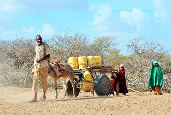 A family in Garissa County, Kenya, treks to the closest water point to fetch water. Two point seven million Kenyans are in need of water and sanitation as a result of the ongoing drought. UNICEFKenya/2017/Serem