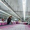 """柬埔寨一家制衣厂工人斯若思(Srey Sros)说:""""防止性骚扰意味着在工作场所赋予妇女权利。当性骚扰发生时,它不仅影响一个人,它影响在集体水平。"""""""