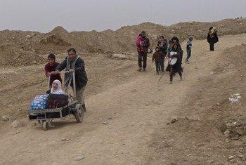 الأسر العراقية الفارة من الموصل. المصدر: إيرين / توم وستكوت