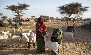 Засуха в Сомали обрекает людей на голод. Фото ФАО/Карен Принслу