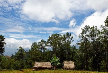 Sustainably managed forests are a key to meeting energy needs of almost a third of the world's population.