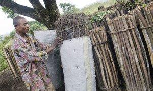 La fabrication et l'utilisation efficaces du charbon de bois peuvent aider à atténuer les changements climatiques. Un homme arrangeant des sacs de charbon de bois dans une zone temporaire à Ntendesi, en République démocratique du Congo.