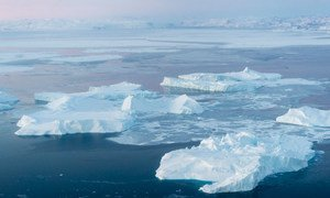 A view of icebergs in Ilulissat Icefjord Greenland, where the melting of ice sheets is accelerating.