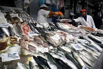 Pescado fresco en un mercado de Roma. Foto: FAO/Alessia Pierdomenico