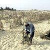 في منطقة الساحل، دمرت العديد من موجات الجفاف في عام 2017 محاصيل المزارعين والماشية. في الصورة: مزارع في السنغال يروي الزرع.