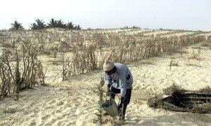 Au Sénégal, un agriculteur arrose des plantes dans une zone touchée par la sécheresse.