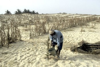 Un agricultor en una zona afectada por Senegal riega las plantas.