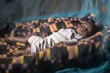 Plus de 50% des personnes menacées par le paludisme en Afrique dorment maintenant sous des moustiquaires imprégnées d'insecticide. Photo OMS