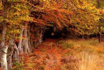 Floresta Selm Muir na Escócia.