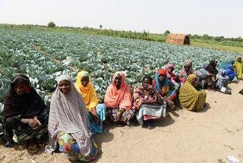 Des femmes dans une ferme soutenue par la FAO à Maiduguri, au nord-est du Nigéria. Photo FAO/Pius Utomi Ekpei