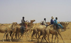 Tuareg refugees ride camels to the desert area of Initkan, Niger, where they received UNHCR assistance.