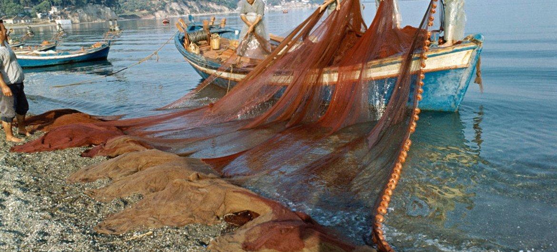 希腊渔民在作业。