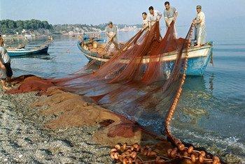 Des pêcheurs à Evia, en Grèce (Archives)